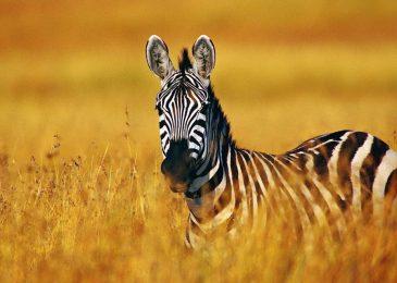 Thuật toán Google zebra phạt những lỗi nào